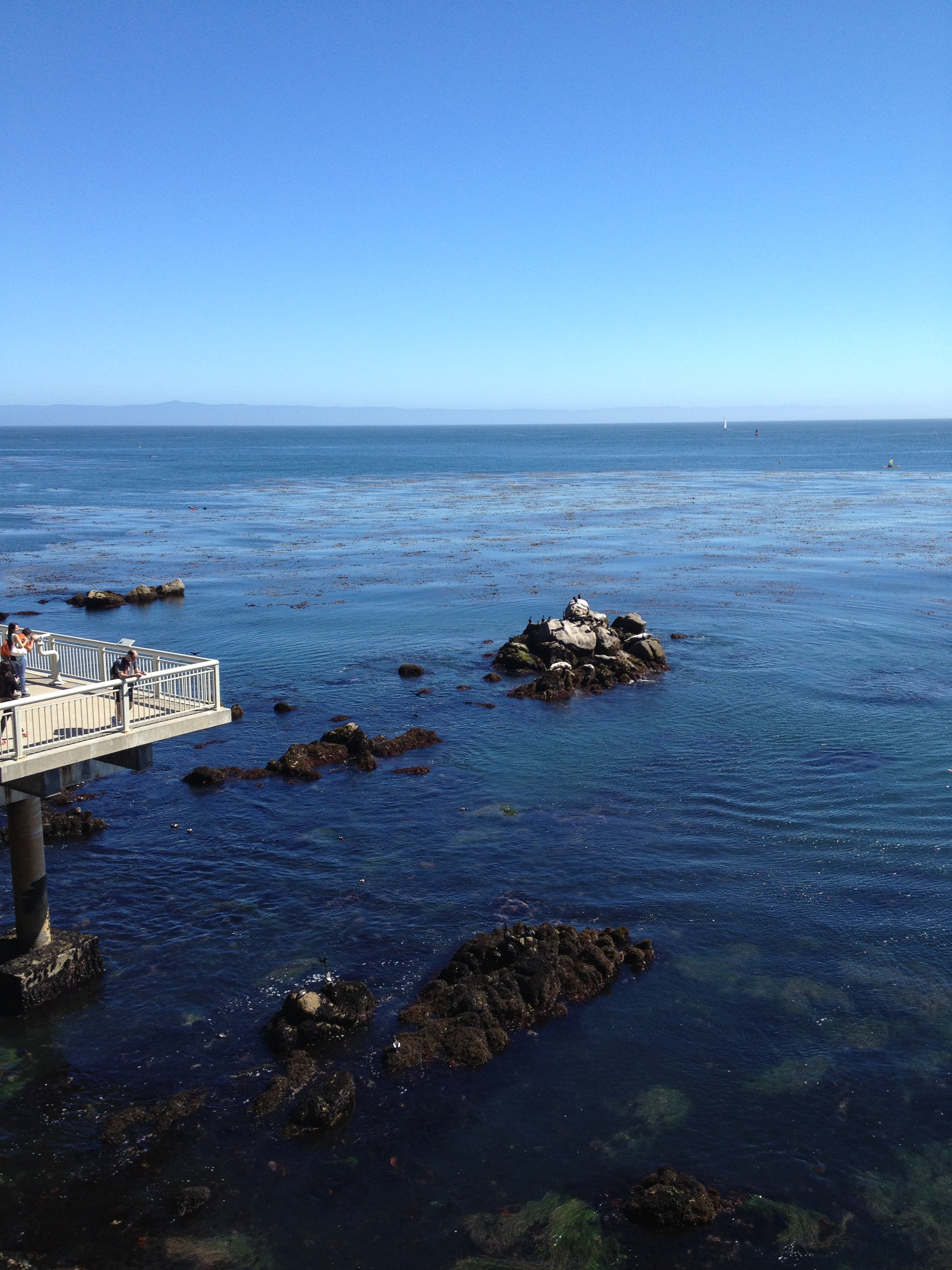 Observation deck at the Monterey Bay Aquarium
