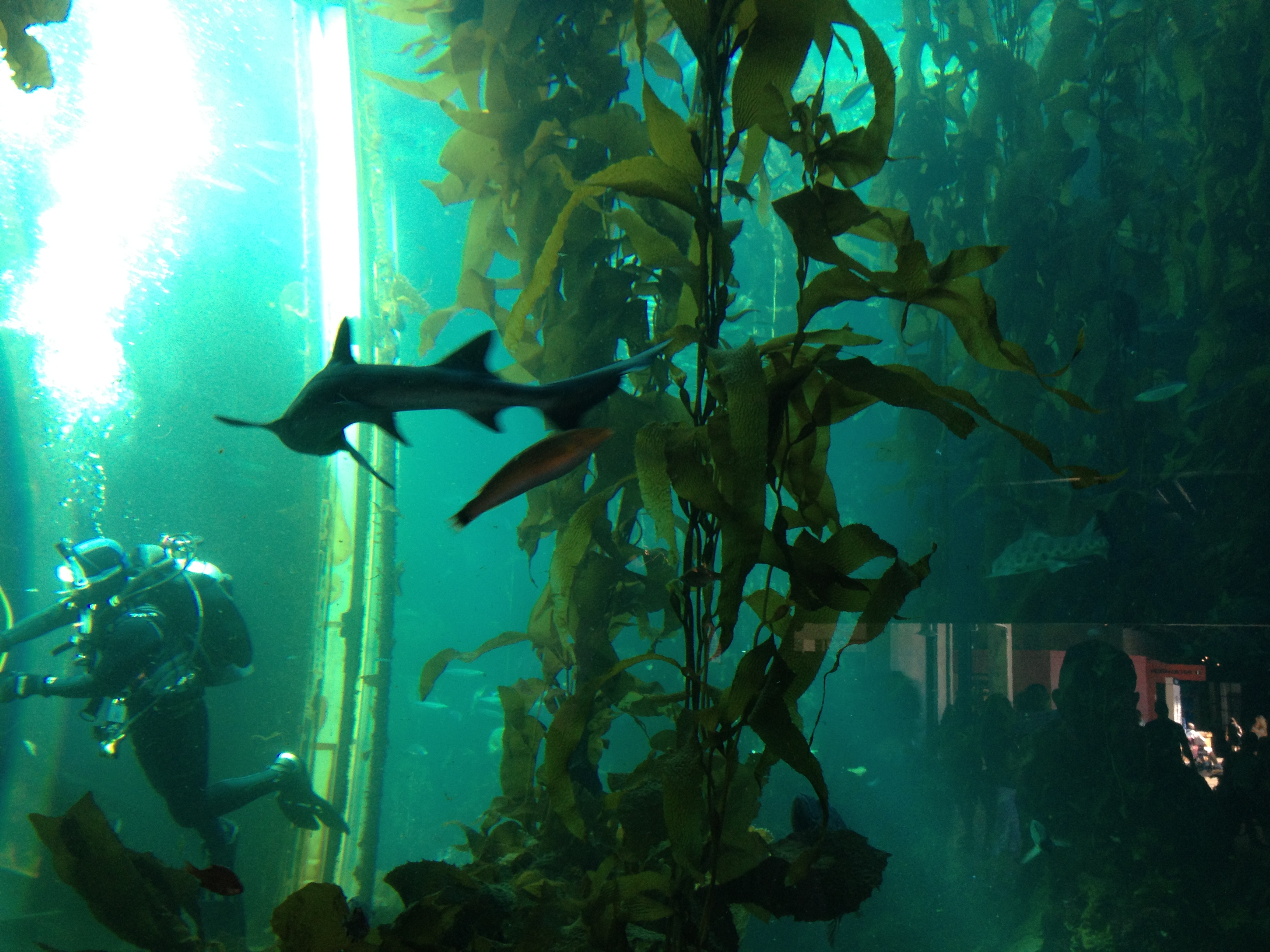 The Kelp Forest Monterey Bay Aquarium