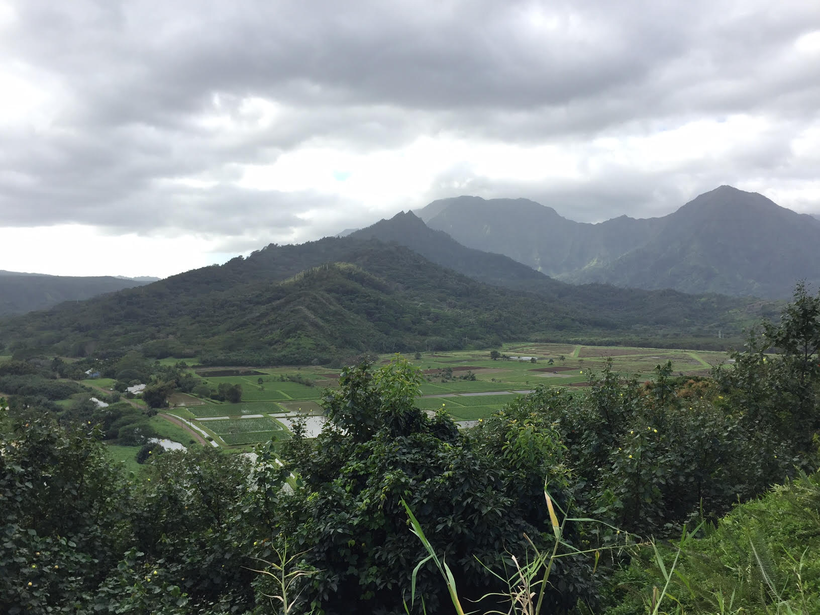 Hanalei Valley Lookout Taro Fields